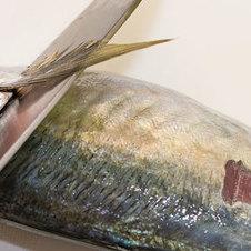 釣りの醍醐味である釣った魚を料理しよう! 料理方法とレシピ